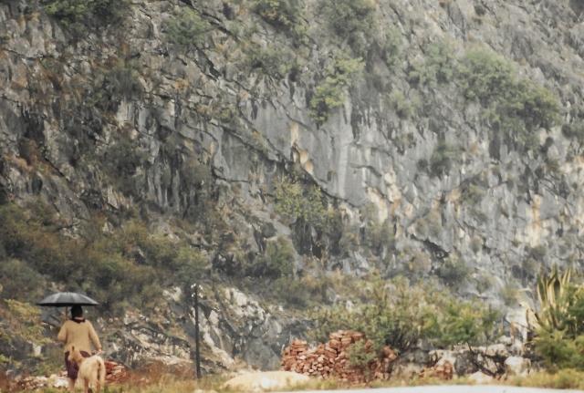 Nov 1987 Woman walking goat